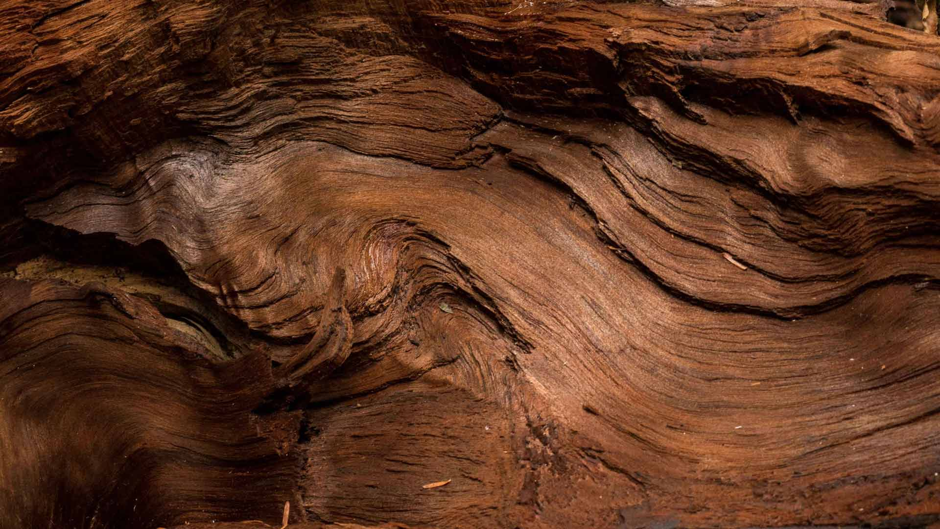 Lavorare Il Legno Pdf : Daniele coan u daniele coan u emozioni in legno